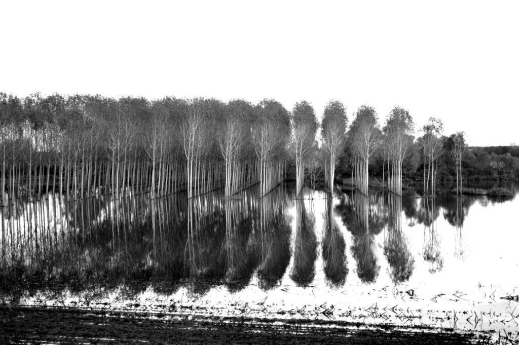 A11- Flood - Luca B.